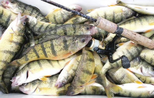 Maumee River and Lake Erie Report -July 14 2017