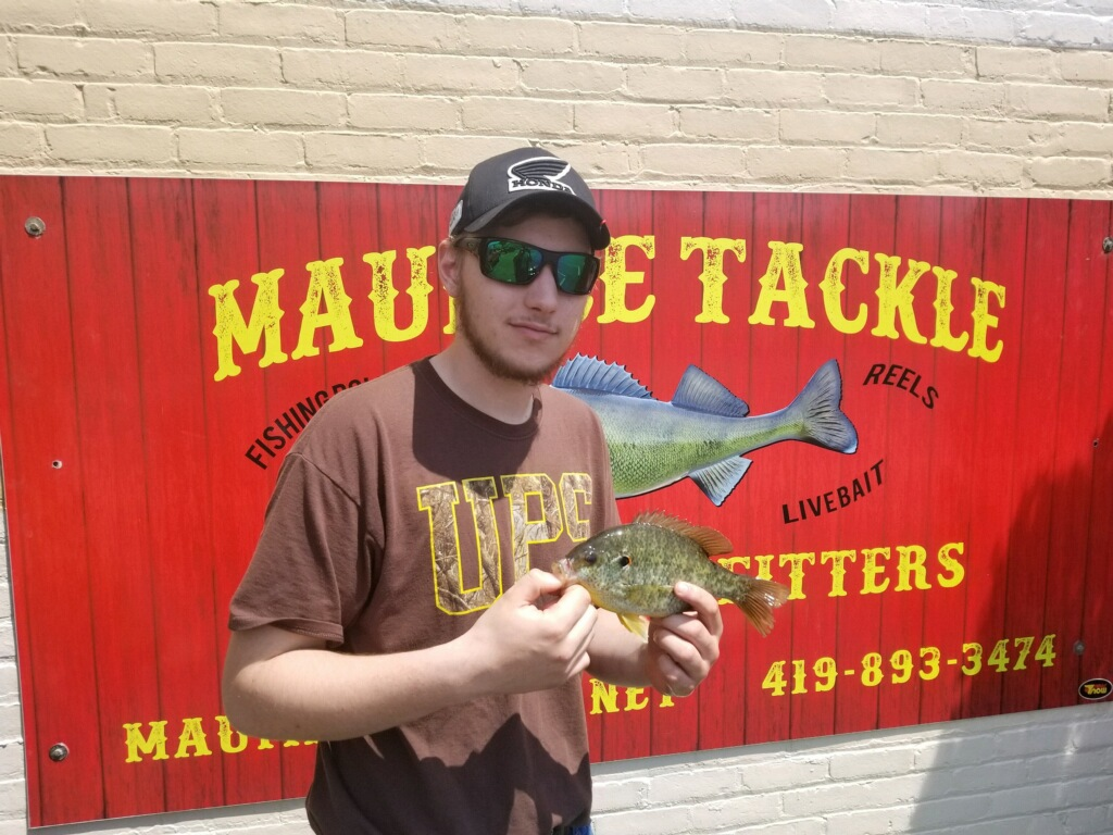 Maumee River Report- 28 May 2018- Emerald Shiners in Stock- Bluegills starting to get very active