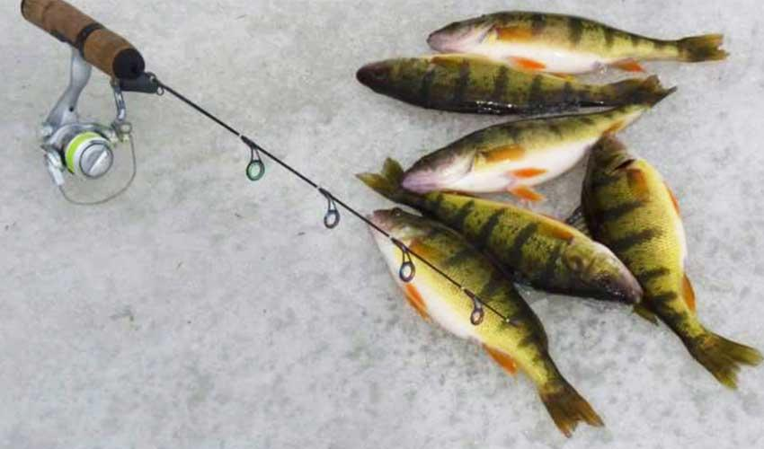 Maumee River report- Some changes to fishing regs this year.