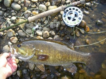 Maumee River Report- 7 June ,2019