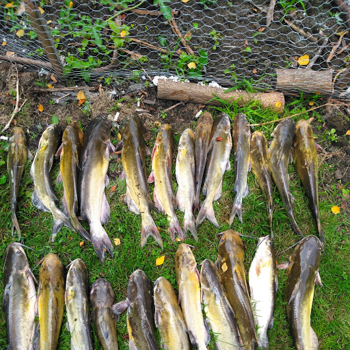 MAUMEE RIVER REPORT- SEPTEMBER 21, 2019