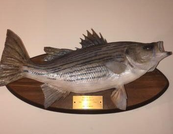 White Bass tournament and the hunt for the state record