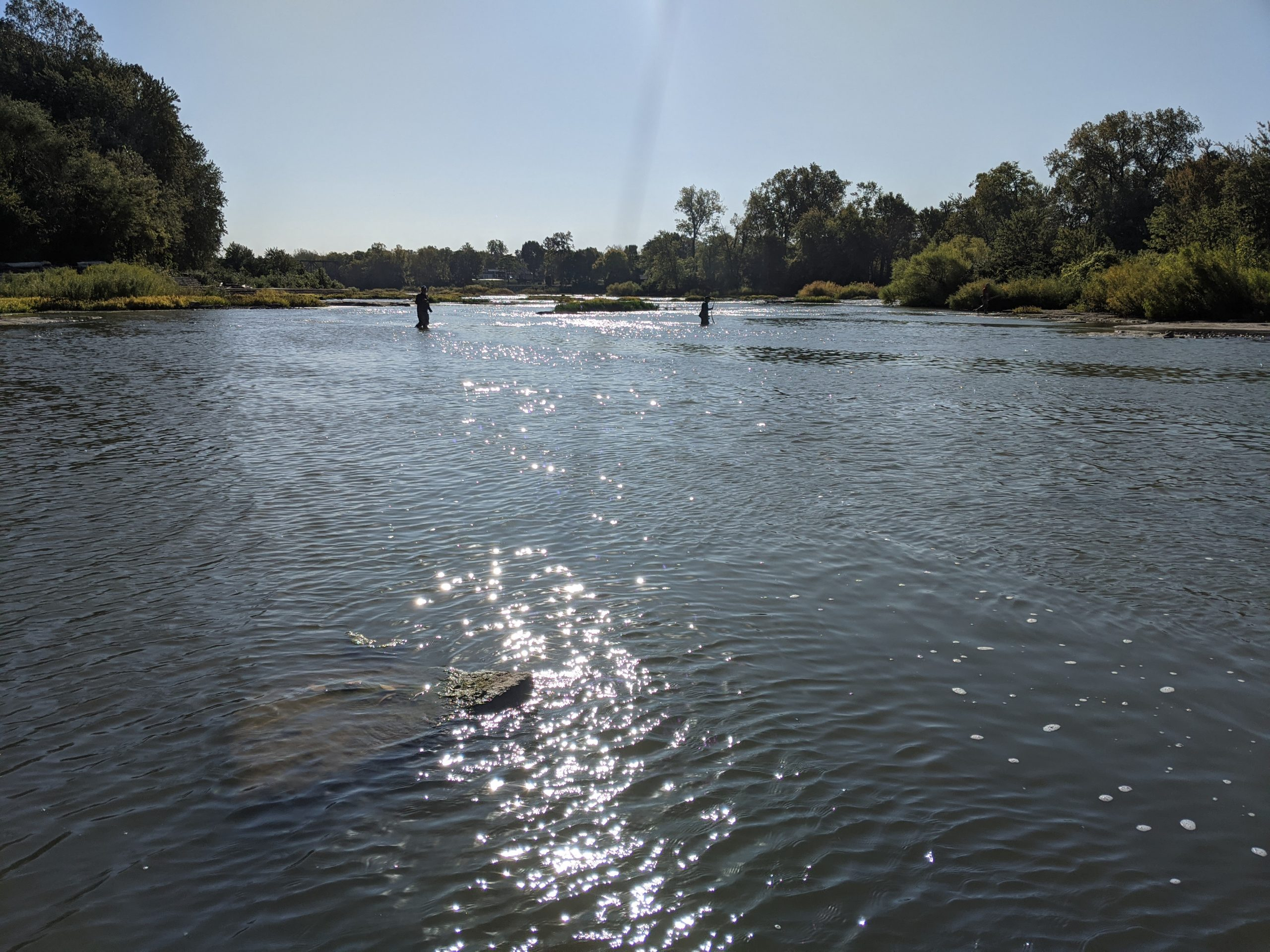 Maumee river report..7 October, 2020
