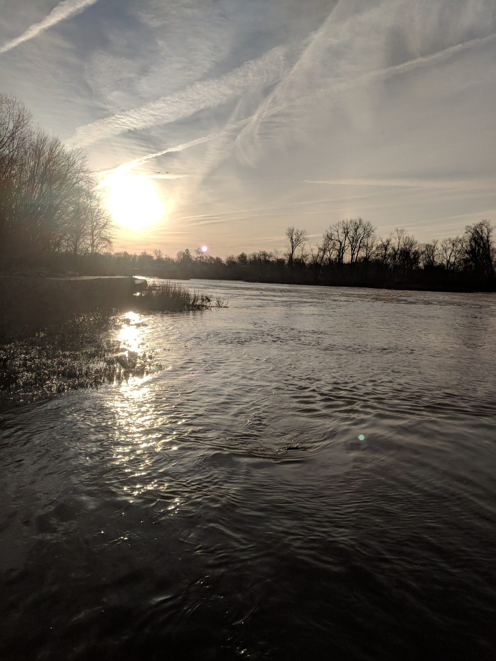 Maumee River Report january 9, 2020- Emerald Shiners in Stock