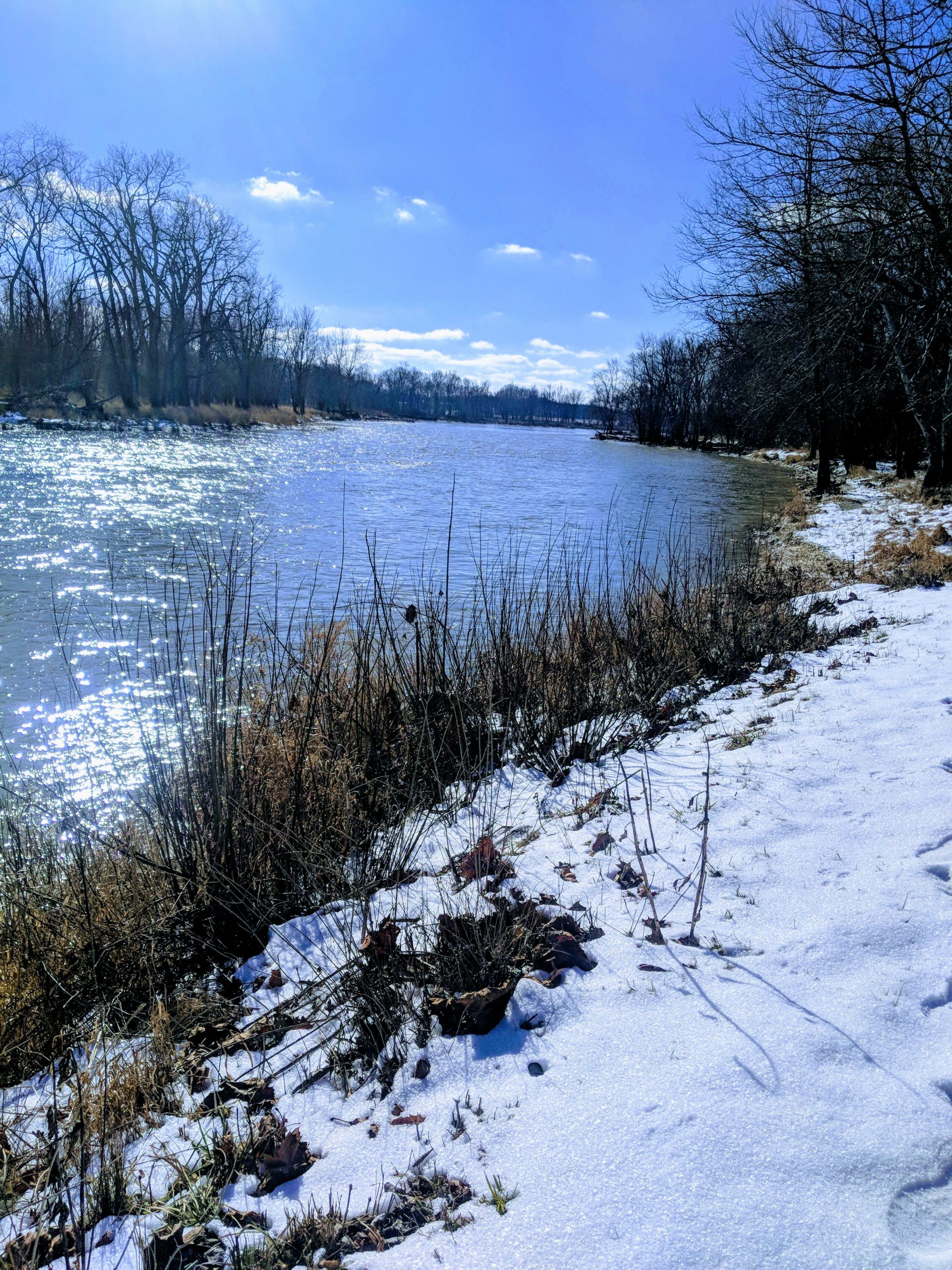 Maumee River Report- 22 January 2020