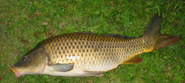 Maumee River Report- July.12. 2017