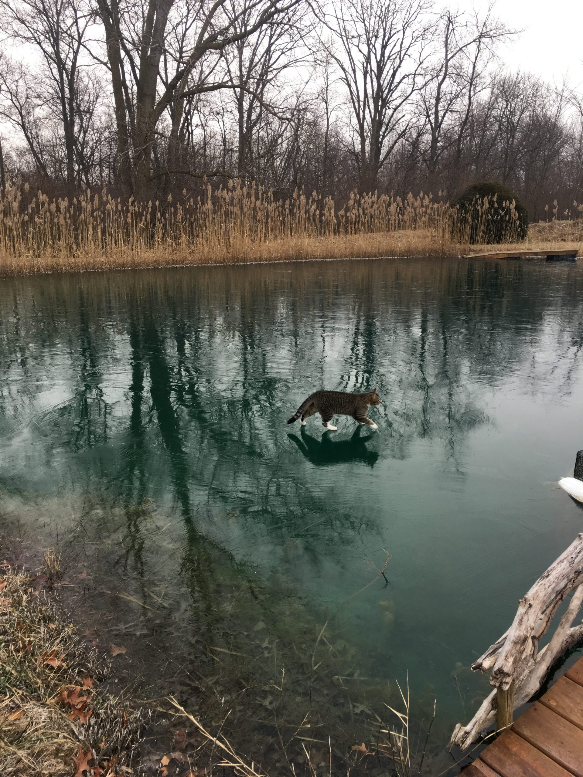Maumee River and area conditions- January  13, 2019