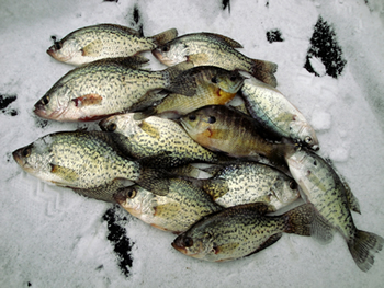 Maumee River and Ice Fishing Report- February 6, 2018